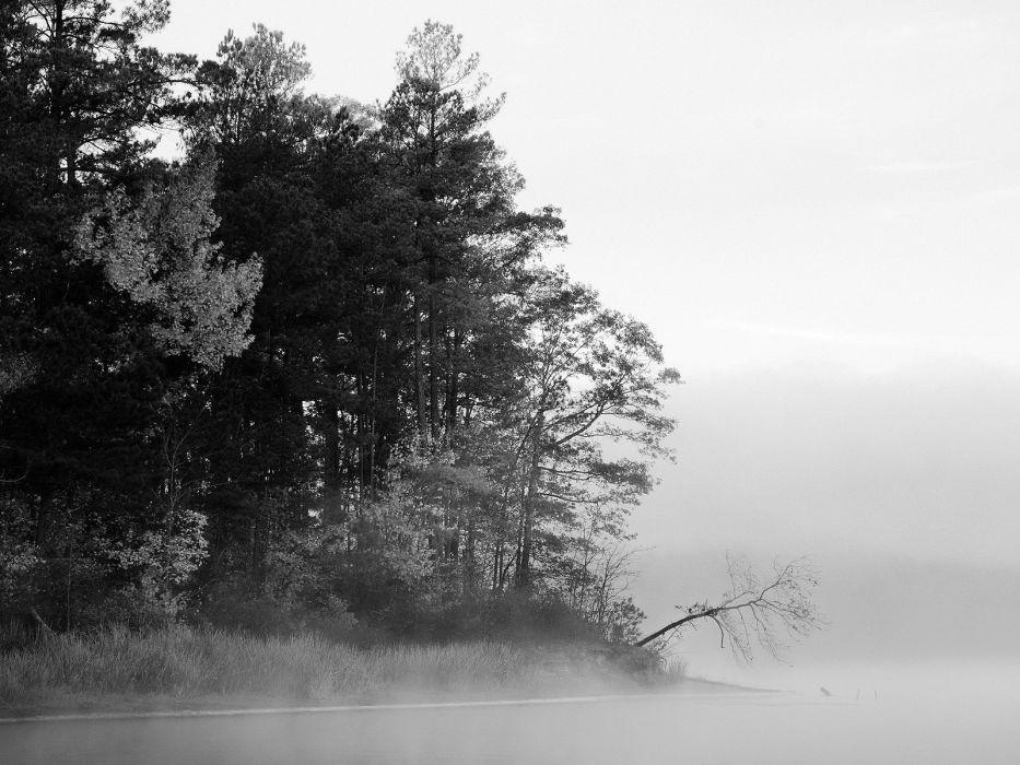 landscapes nature winter snow fog wallpaper