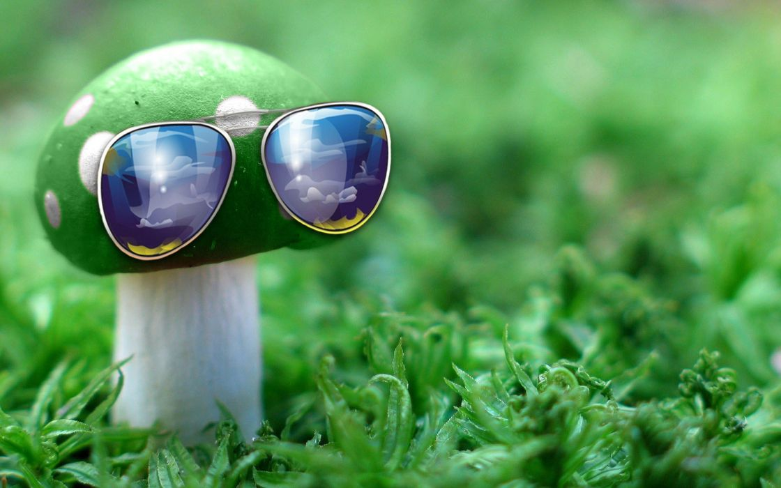 green nature grass mushrooms sunglasses wallpaper
