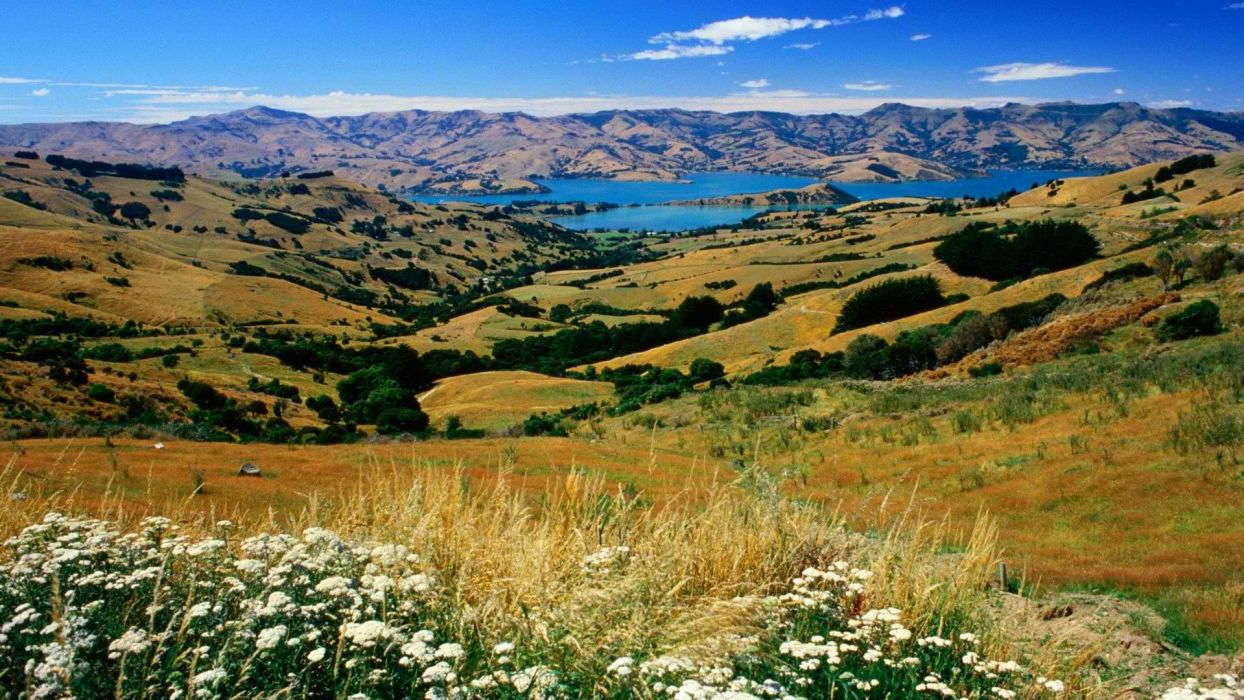 New Zealand countryside wallpaper