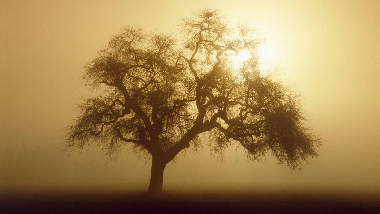 sunrise California wallpaper