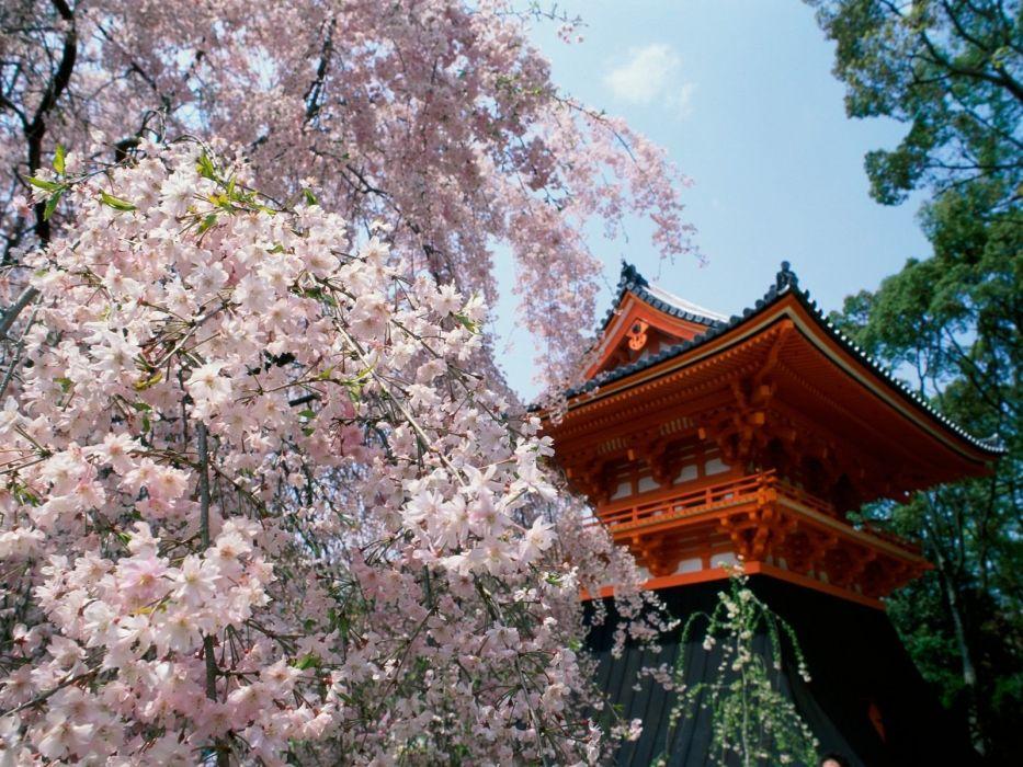 cherry blossoms wallpaper