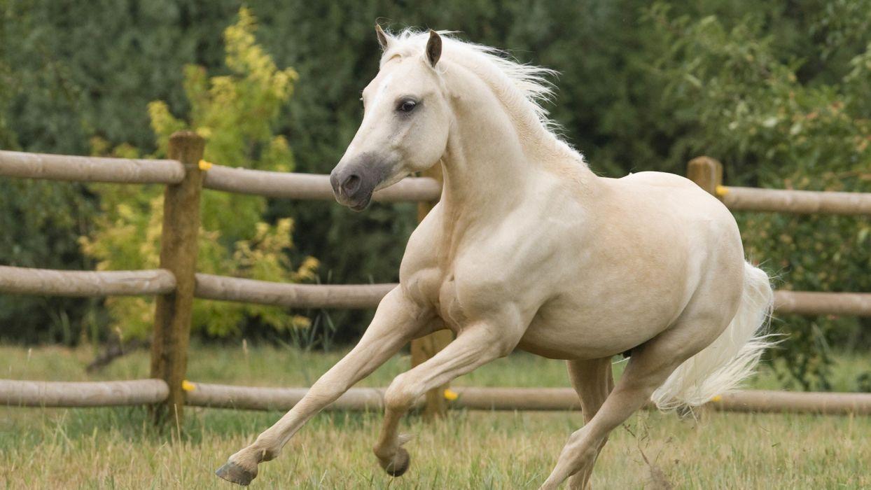 animals horses Colorado ponies Welsh wallpaper