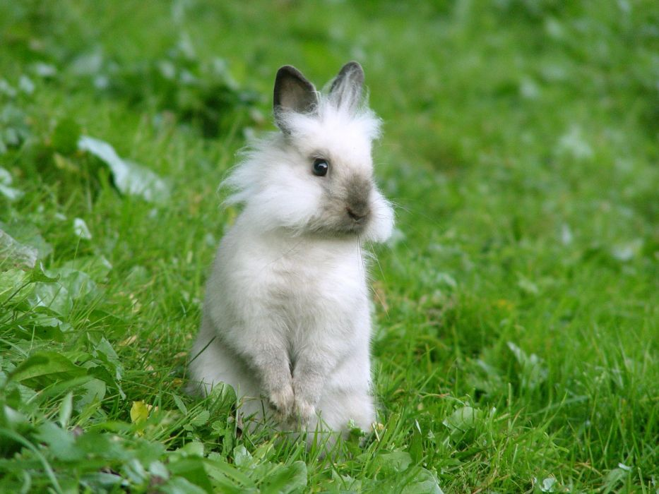 animals rabbits wallpaper