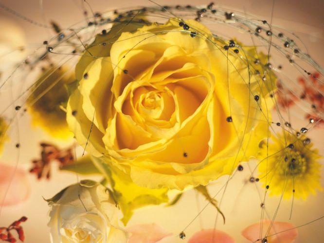 flowers spring yellow rose wallpaper