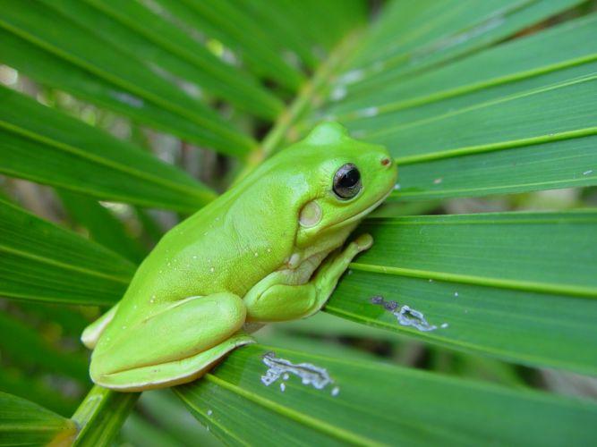 green nature leaf animals frogs amphibians wallpaper