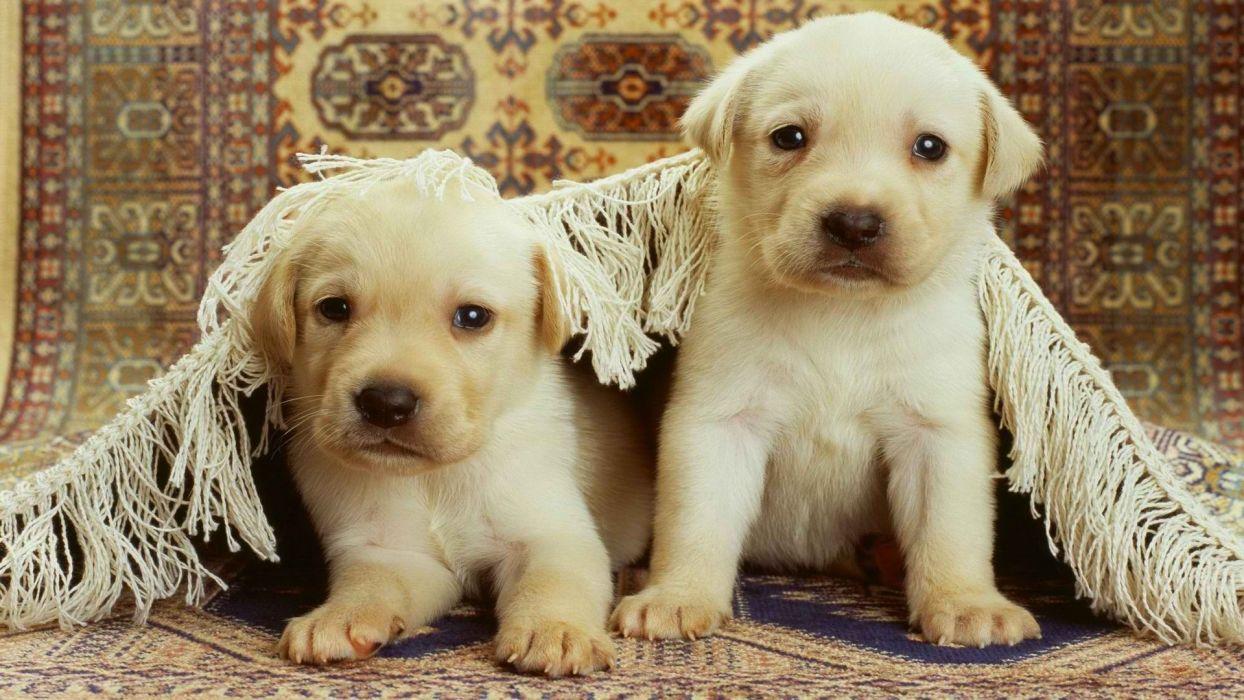 animals dogs puppies wallpaper