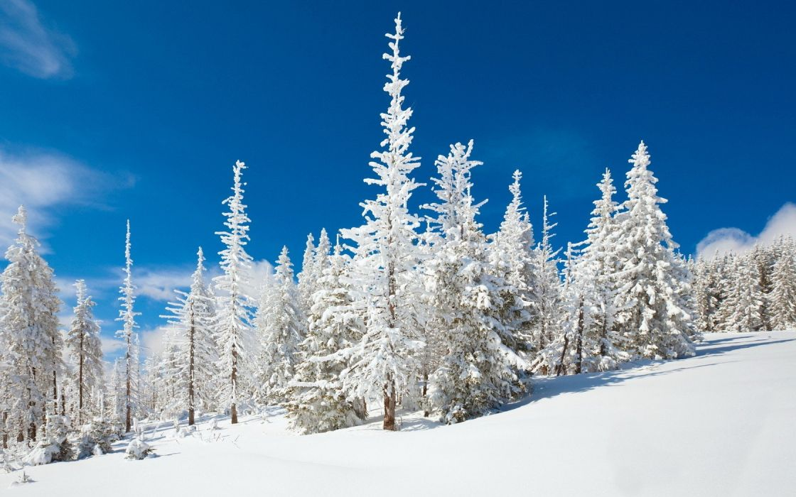 blue clouds winter snow Evergreen skyscapes wallpaper
