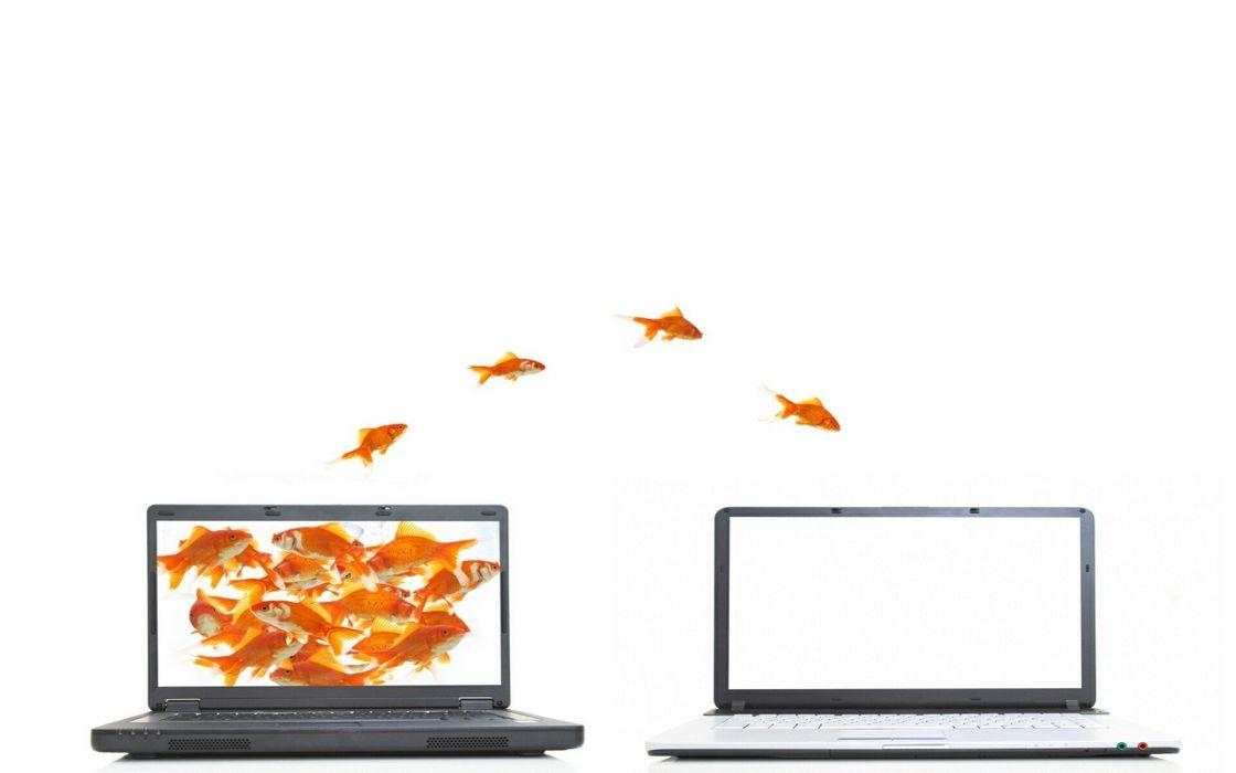 orange fish funny jumping goldfish laptops white background screens wallpaper