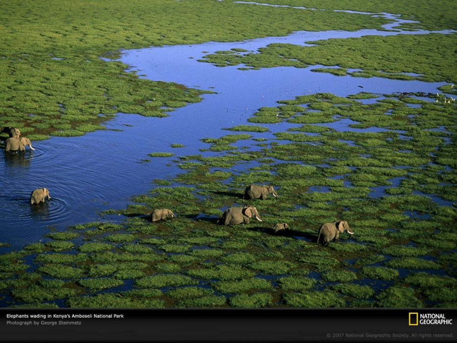 animals National Geographic elephants swamps Kenya wallpaper