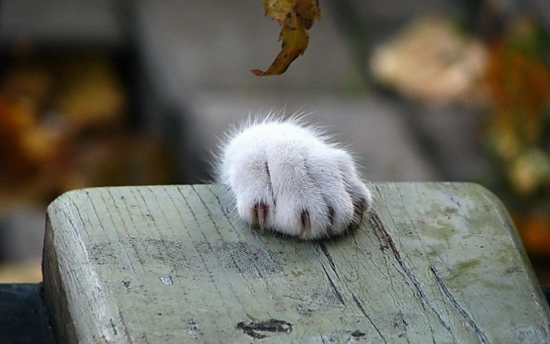 cats animals paws wallpaper