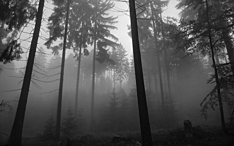 trees forests grayscale wallpaper