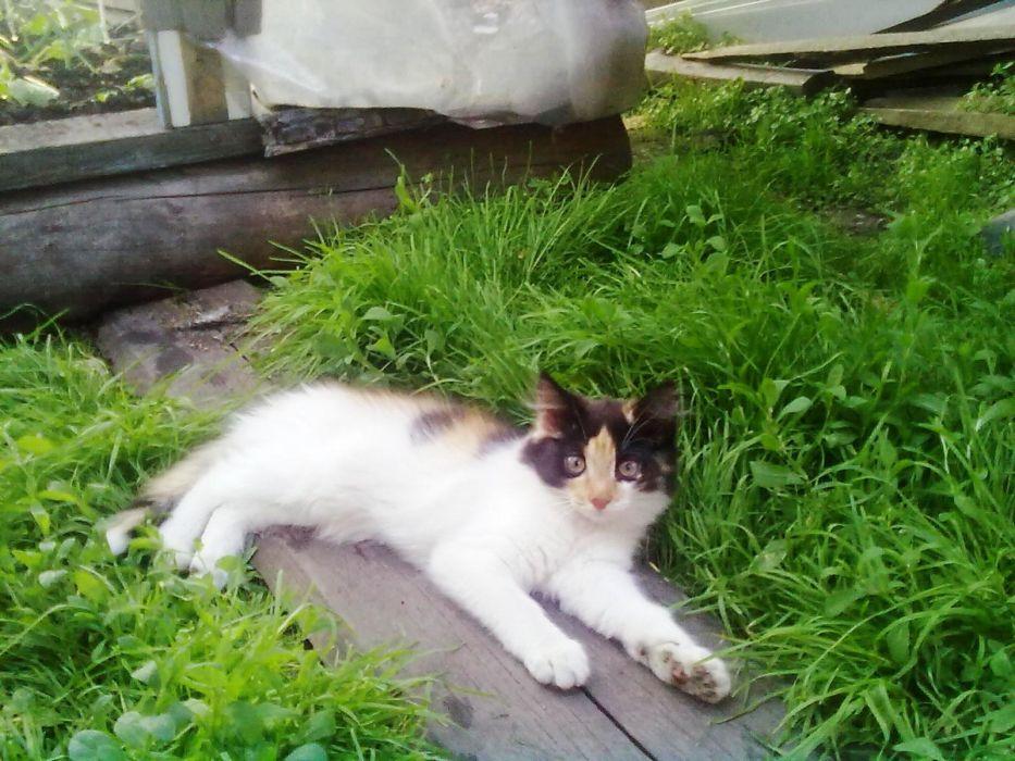 green cats grass garden wallpaper