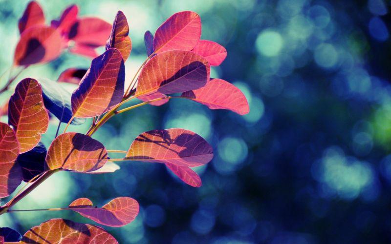 nature red leaves bokeh wallpaper