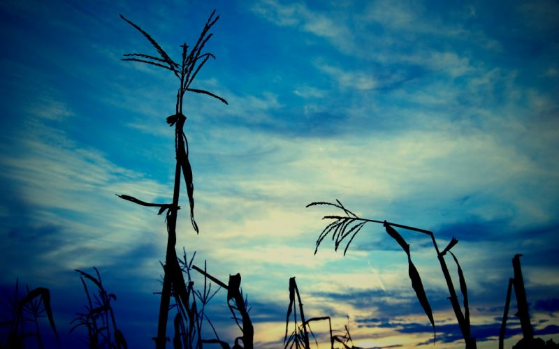 silhouettes plants skyscapes wallpaper