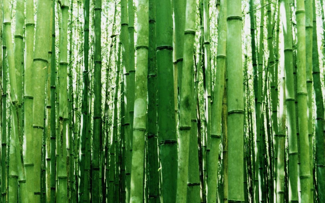green nature bamboo wallpaper