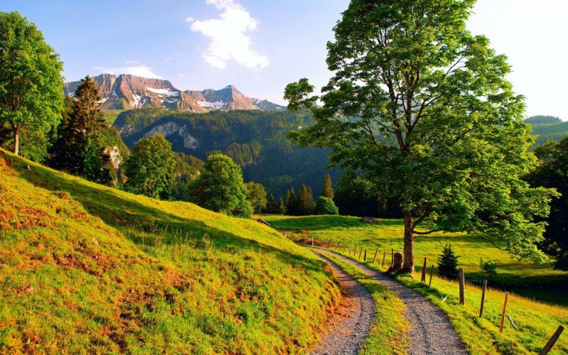 mountains nature trees roads wallpaper