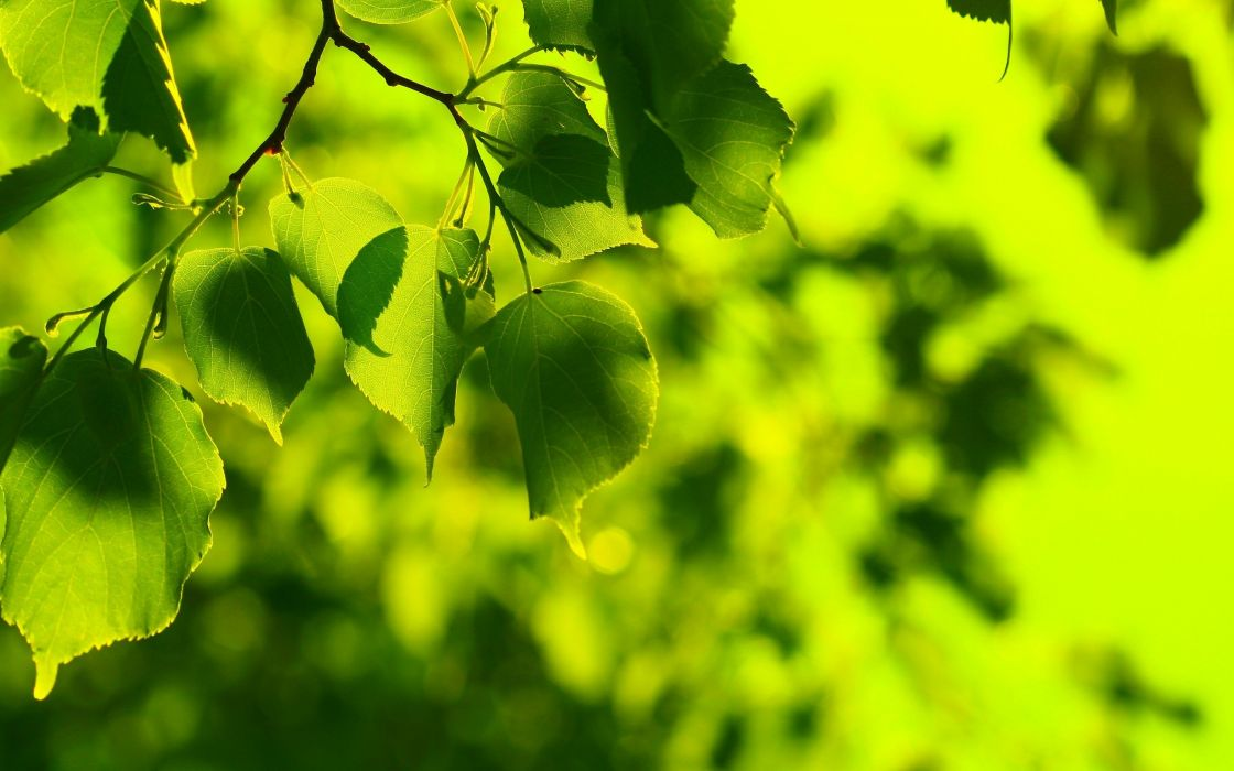 green nature trees leaves wallpaper