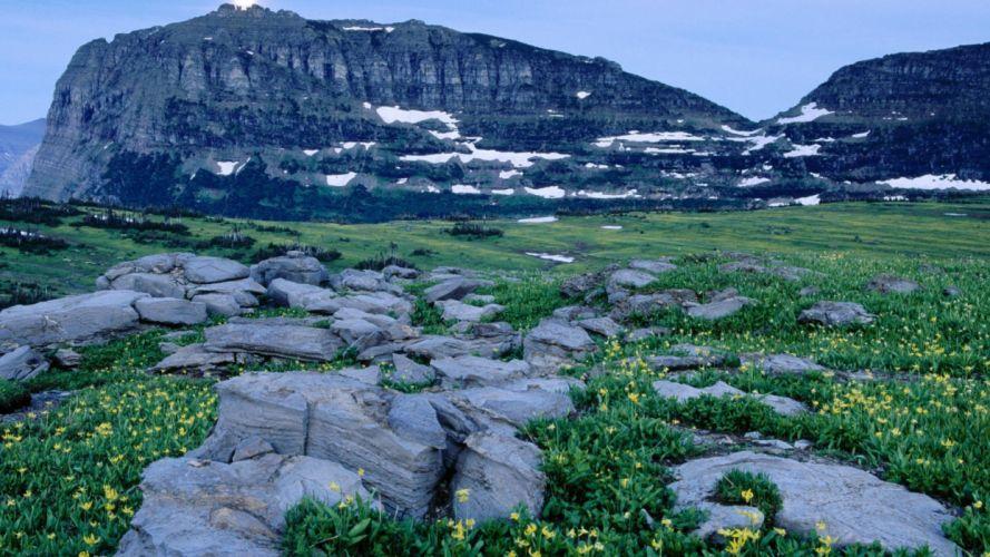 mountains flowers rocks glacier logan National Park wallpaper