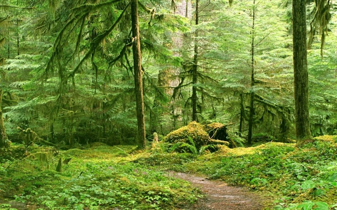 forests trail moss wallpaper