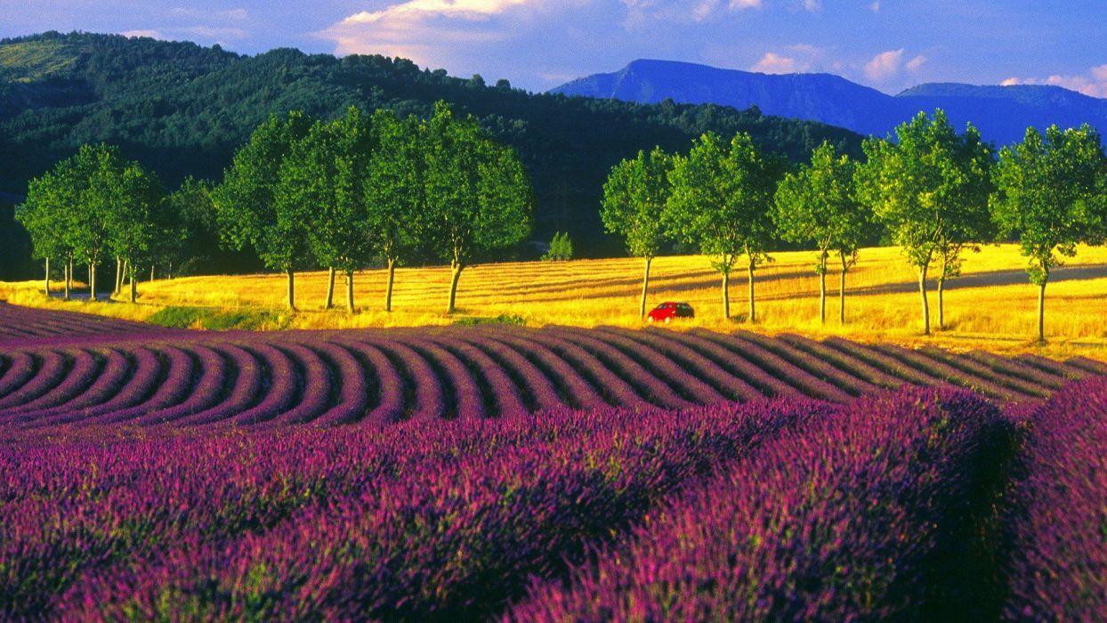 fields France lavender wallpaper
