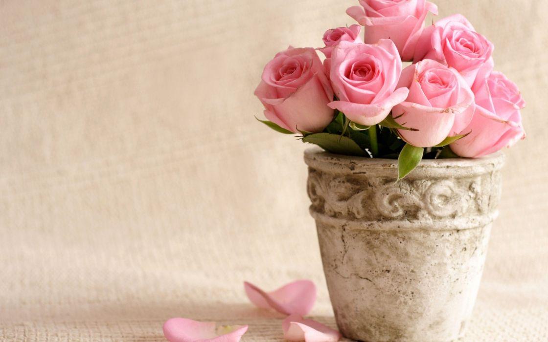 flowers bucket roses vase pink roses wallpaper