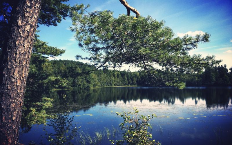 landscapes nature trees forests lakes reflections wallpaper