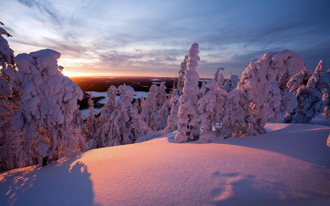 landscapes nature winter snow trees evergreens wallpaper