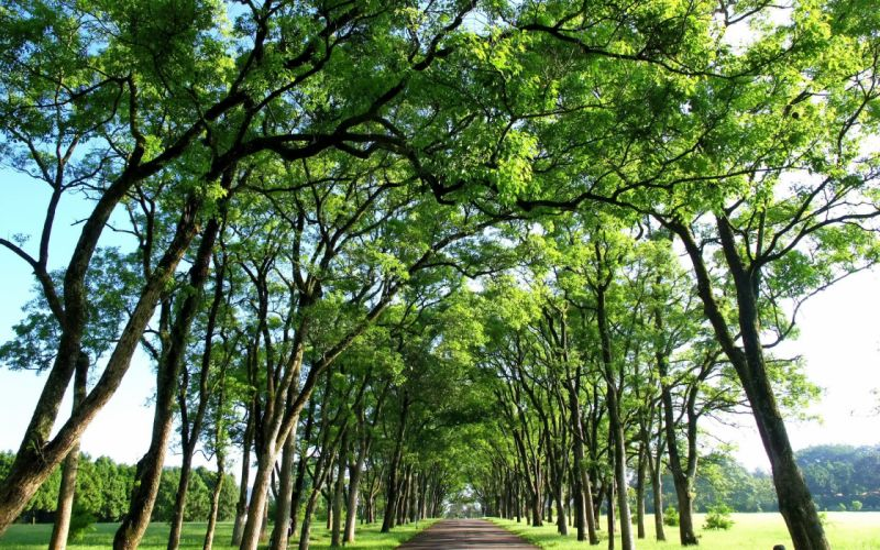green trees roads branches wallpaper