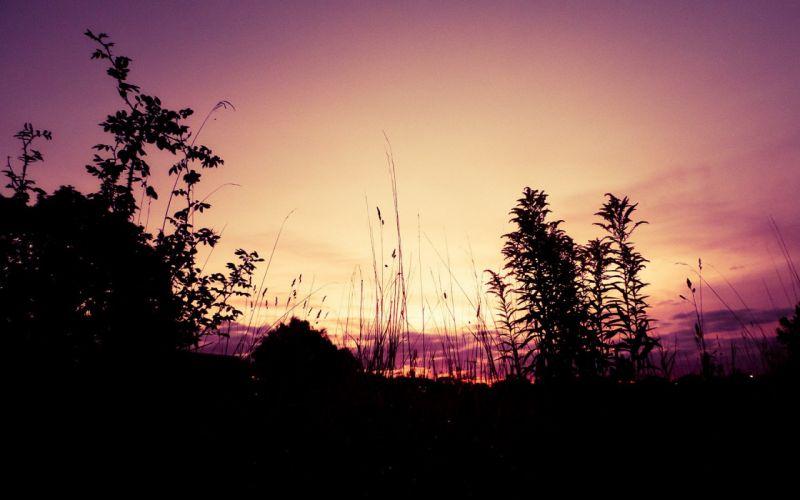 sunset landscapes forests wallpaper