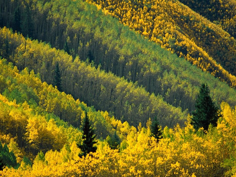 landscapes nature forests wallpaper