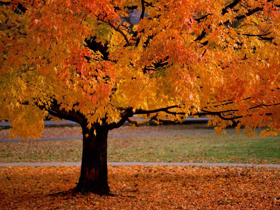 autumn orange leaves fallen leaves wallpaper