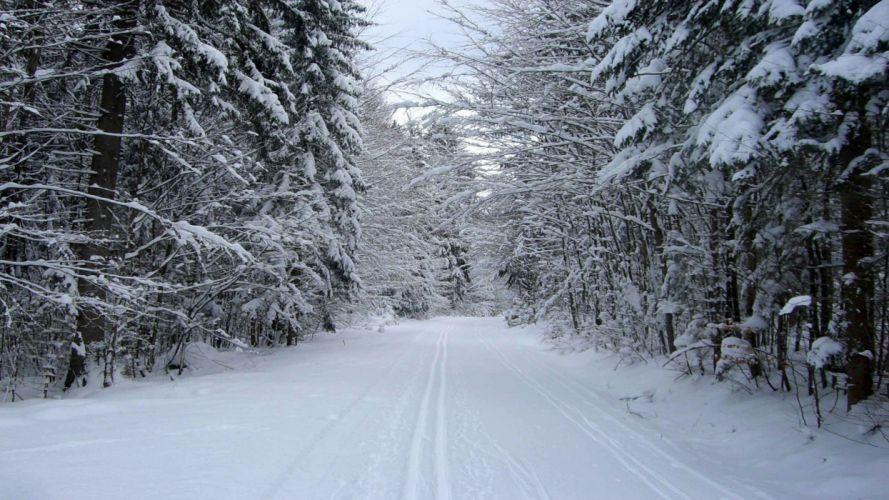 landscapes snow trees roads wallpaper