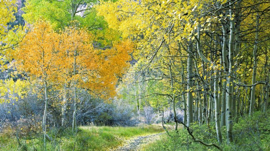 forests California Aspen Sierra eastern wallpaper
