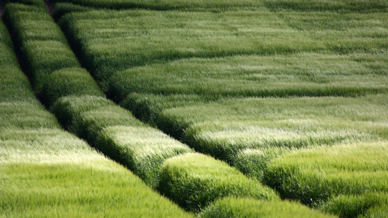 green landscapes nature grass Grassland pasture wallpaper