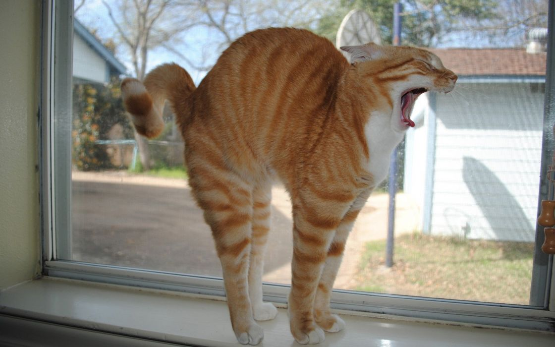 cats animals funny stretching wallpaper