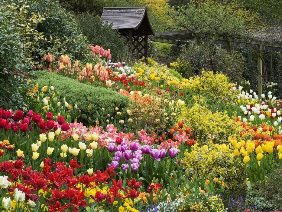 England tulips wallpaper