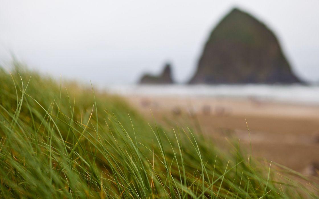 grass beaches wallpaper