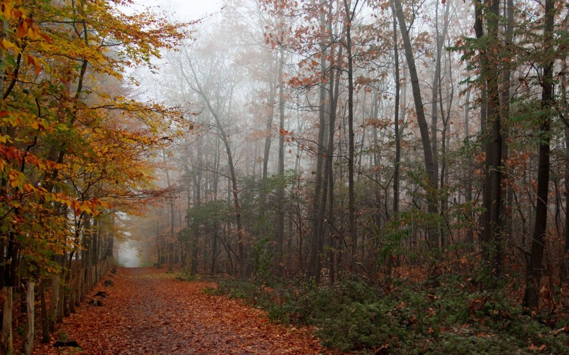 trees autumn forests roads wallpaper