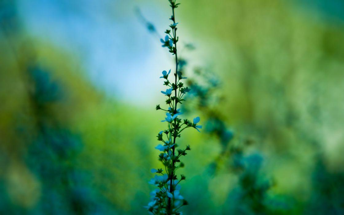 nature flowers plants macro wallpaper