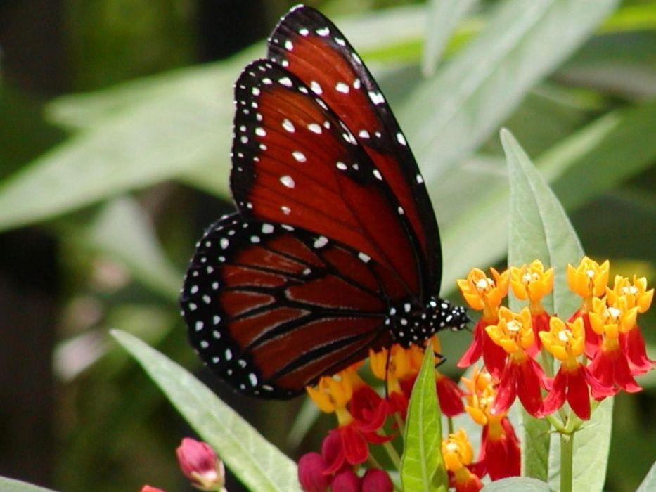 animals butterflies wallpaper