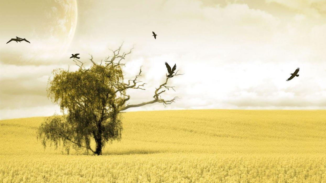 landscapes trees birds wallpaper