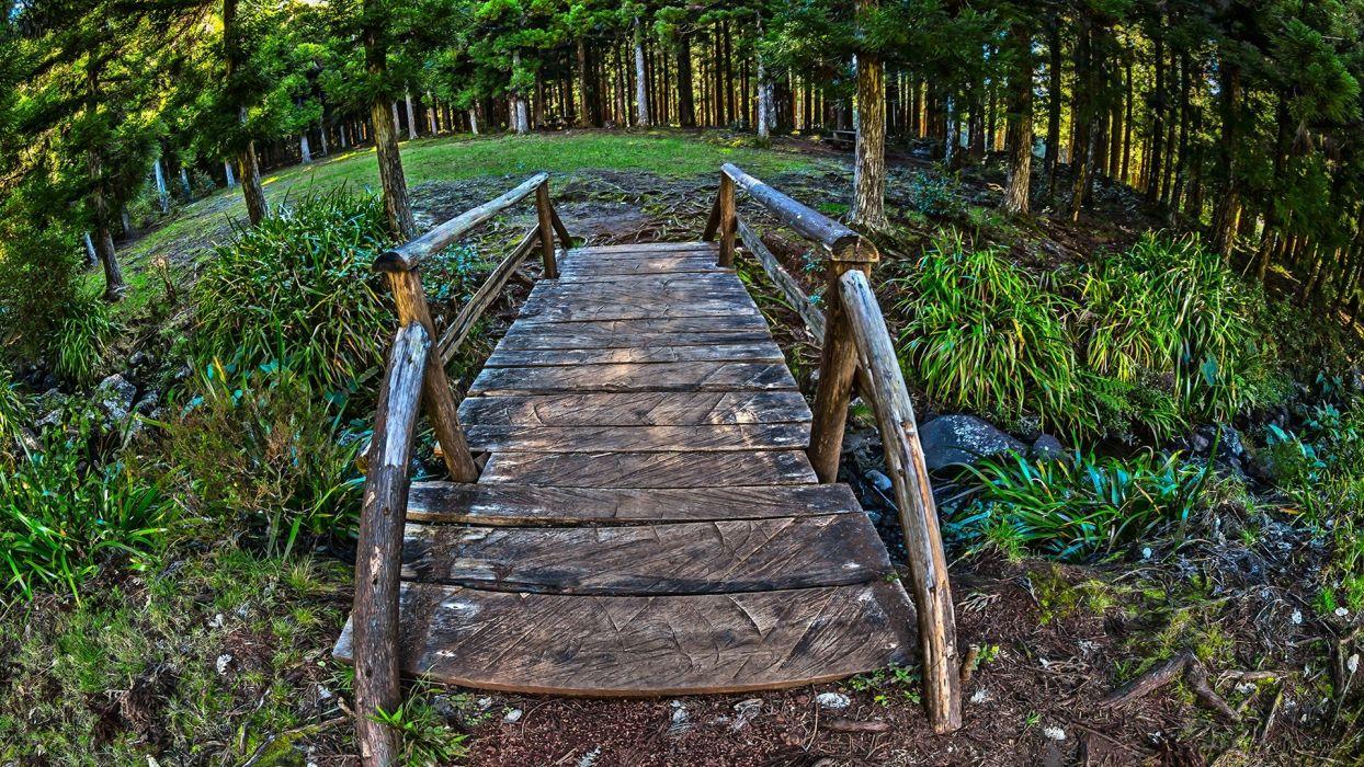 wood forests bridges wallpaper