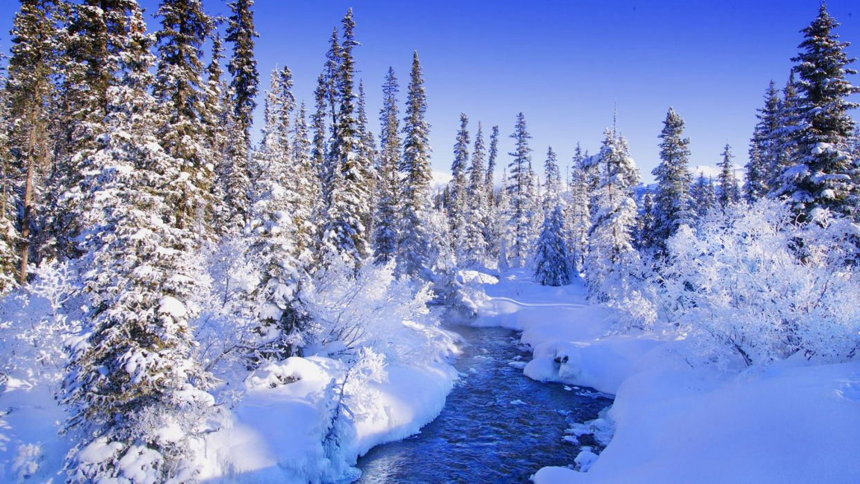 trees forests torrent snow landscapes wallpaper