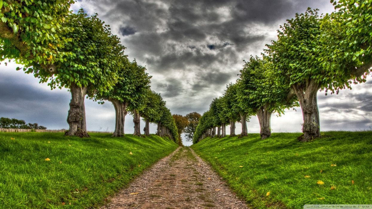 nature trees dirt Alley wallpaper