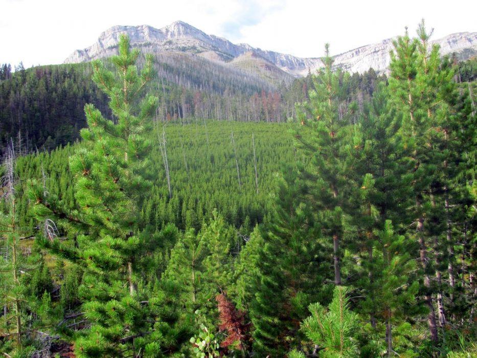 landscapes forests wallpaper