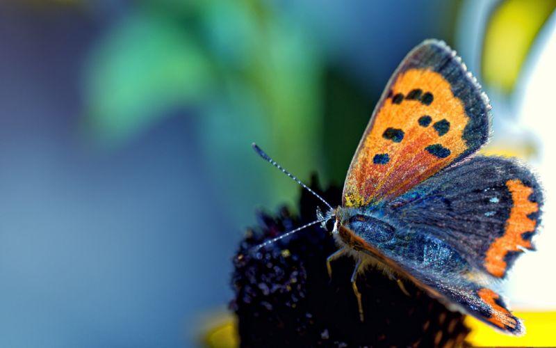 nature flowers macro depth of field butterflies wallpaper