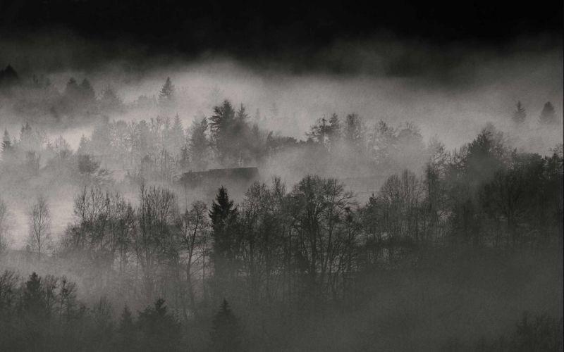 forests fog wallpaper