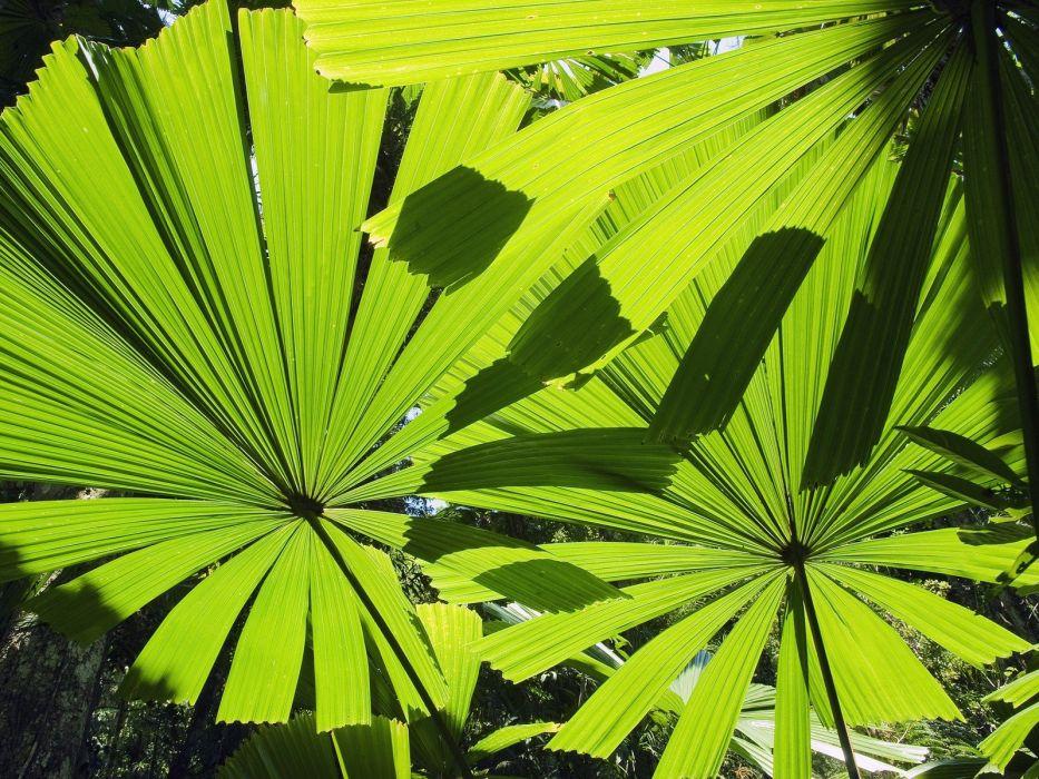 Australia palm leaves beaches wallpaper