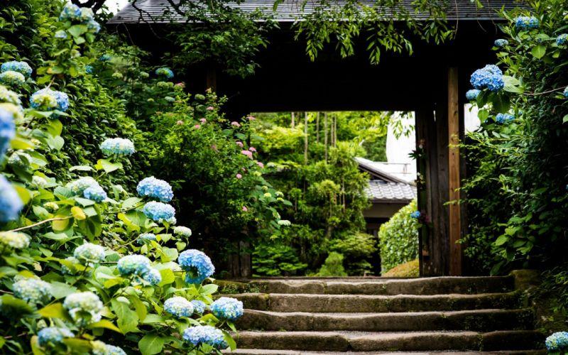 nature trees architecture garden stairways blue flowers Hydrangeas wallpaper