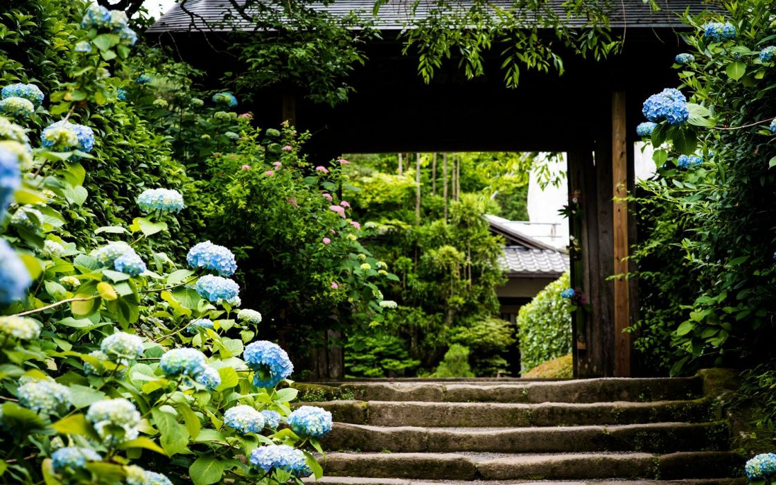 nature trees architecture garden stairways blue flowers Hydrangeas wallpaper